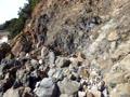 海岸の岩を登るダルMIX